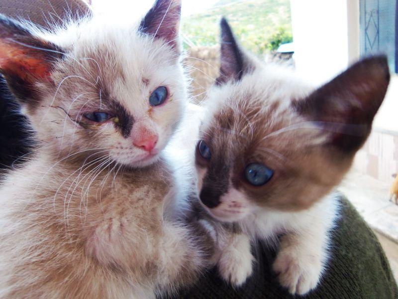 Kittens on Jack's back compressed
