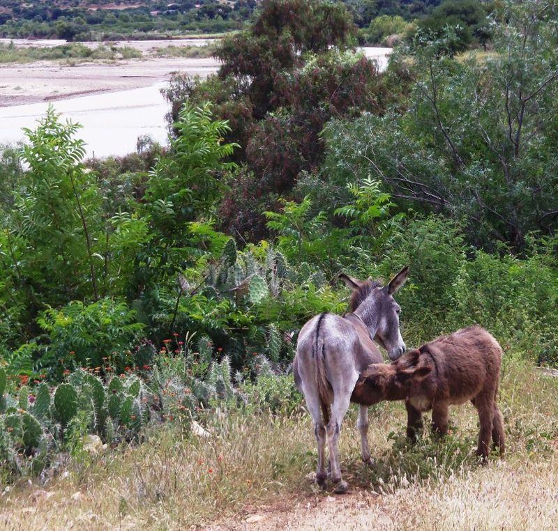Donkeys, compressed