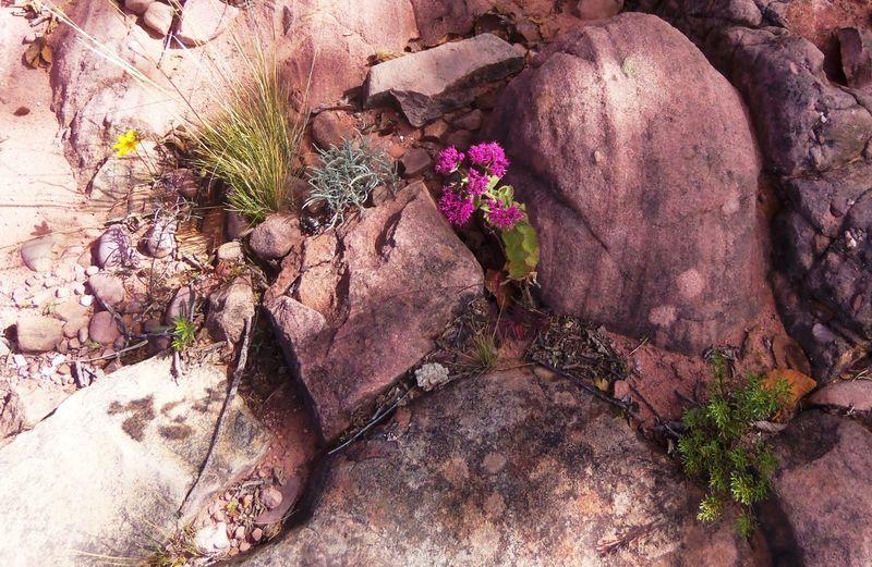 Inca trail 2, compressed