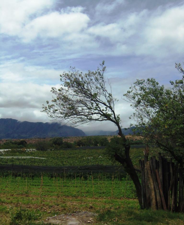 Vineyard, compressed